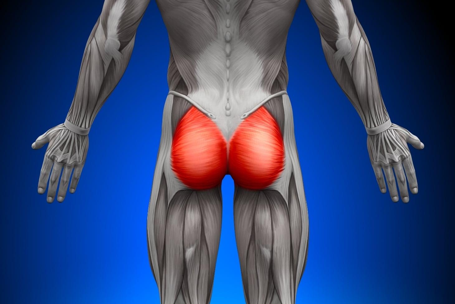 Ягодичные мышцы